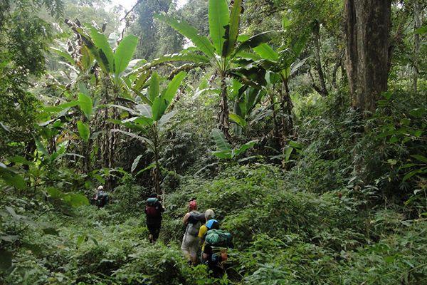 Дослідити джунглі. Чіангмай, Таїланд