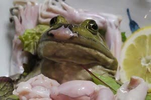 frog sashimi