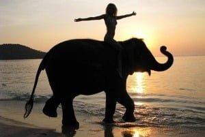 Катання на слоні