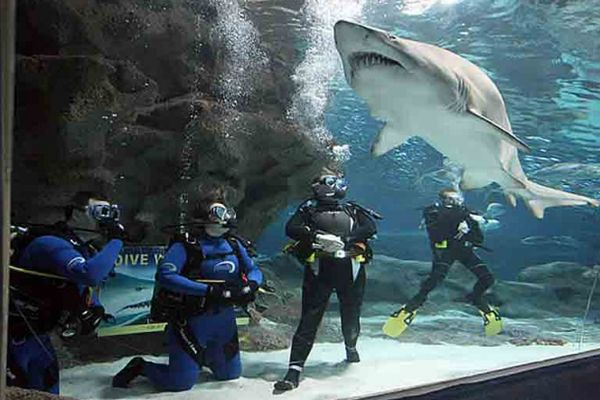 дайвінг з акулами оае