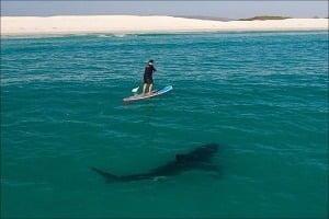 Плавання з білими акулами — Каліфорнія, США