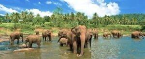 Поради туристам на Шрі-Ланці
