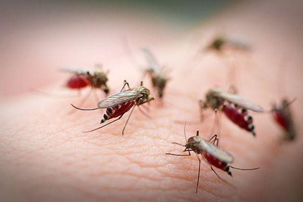 поради туристам на шрі-ланці про комарів
