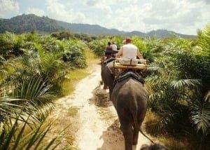 Сертифікат погонича слонів, Таїланд